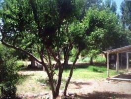 Dahir Real Estate Sales Farm 10 hectares Sauzal bonito Añelo