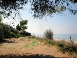 INVESTMENT PROPERTY IN KASSANDRA HALKIDIKIS GREECE