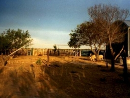 Small farm of 5000 has located close to the city of Viedma
