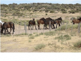 Field of 20,000 hectares approximately 200 km from Trelew.