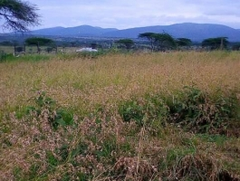 Am selling 5 acres in Kajiado. Own title block