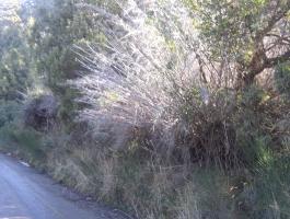 Venta de Lote sercano a Llao Llao  en San Carlos de Bariloche