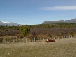 CHACRA EXCELENTE EN MALLIN AHOGADO - PATAGONIA ARGENTINA.