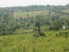 Our Wakiso Banda estate, 50*100 along Hoima Road with a private Mailo land